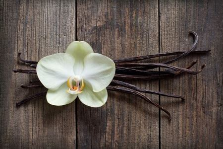 How to Plant and Grow Vanilla Beans   DoItYourself